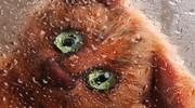 """Vycpaváč zvířat: Úsloví """"jdi se vycpat"""" získává zcela nový rozměr"""